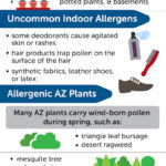 Common and Uncommon Household Allergies